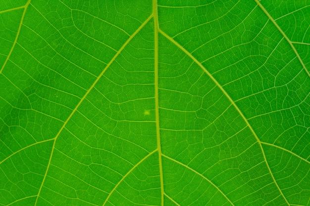 Full frame shot of green leaf texture.