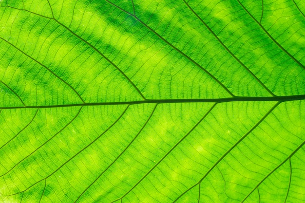 Full frame shot of green leaf texture.