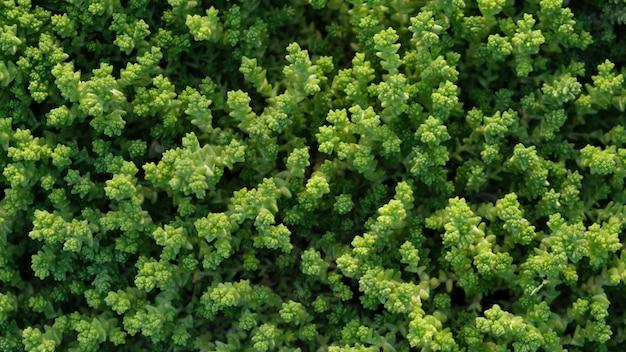 잔디 또는 잔디 질감의 전체 프레임 샷