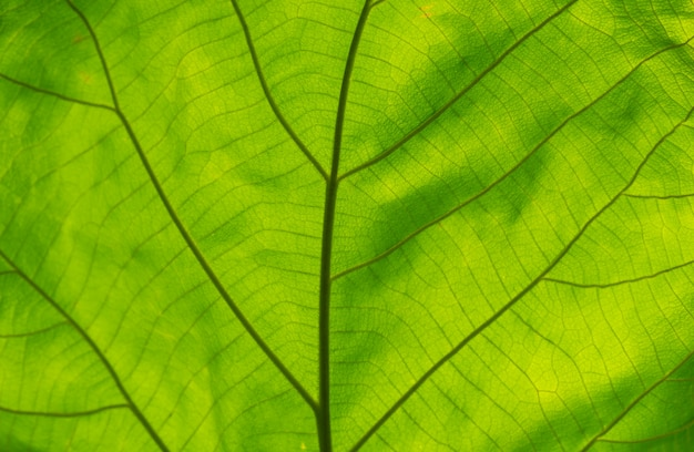 녹색 잎 텍스처의 풀 프레임 샷입니다.