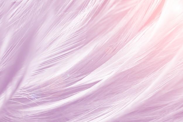 ピンクの羽のフルフレームショット