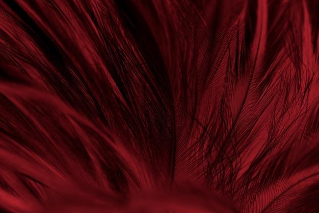 赤い羽のフルフレームショット