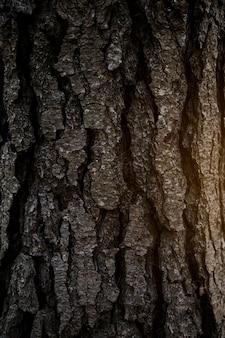 樹皮のフルフレームショット