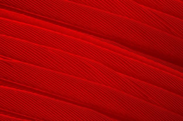 Full frame shot of red feather