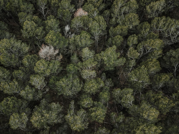 Full frame shot of trees growing outdoors
