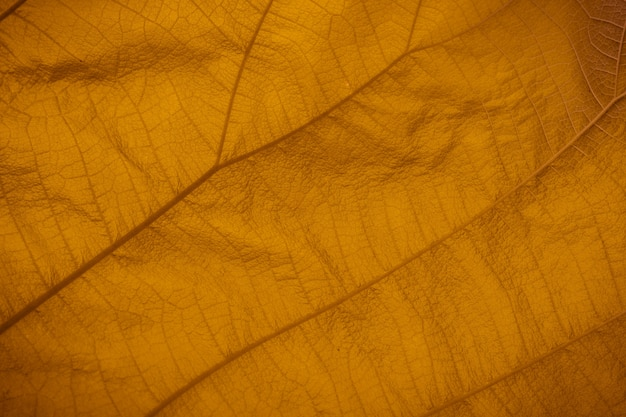 Full frame shot of yellow leaf texture.