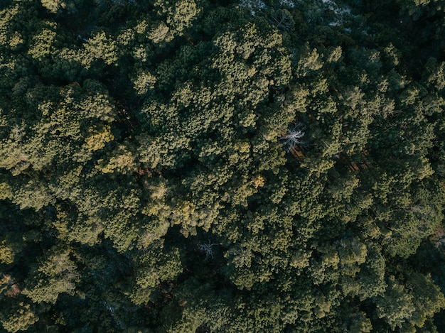 Full frame show of green coniferous trees