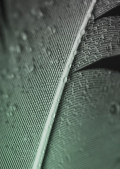 Full frame of water droplets on grey feather surface