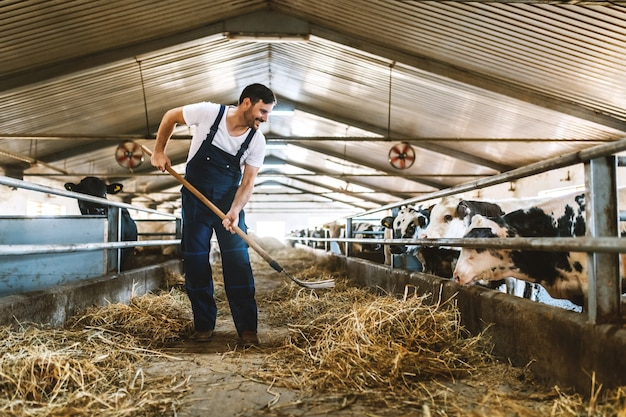Full length of handsome caucasian farmer in overall feeding calves with hay. stable interior.
