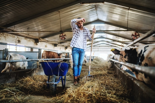 Full length of handsome caucasian farmer in plaid shirt and jeans leaning on hay fork and wiping sweat. stable interior.