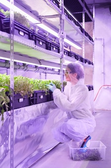 Full length portrait of female agricultural engineer examining plants in nursery greenhouse lit by blue light, copy space