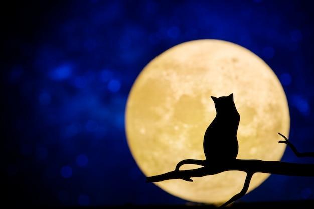 밤하늘에 보름달