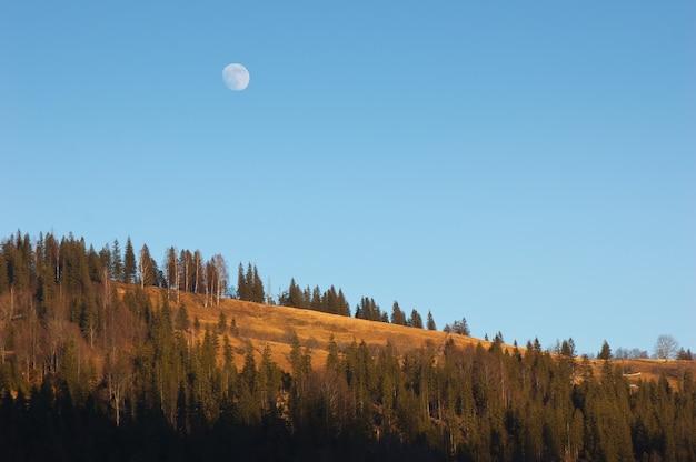 森の上の満月。ウクライナ、カルパティア山脈