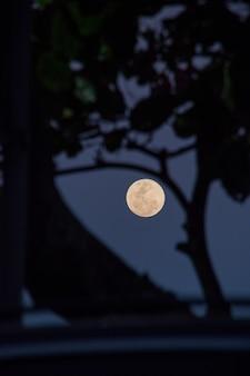 브라질 리우데자네이루의 나뭇가지 실루엣이 있는 보름달.