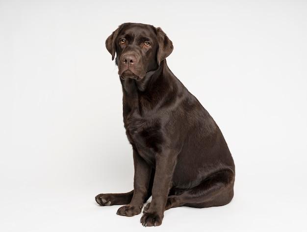 Full shot dog posing with white background