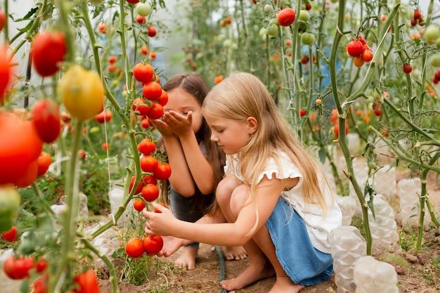トマトを選ぶフルショットの子供たち