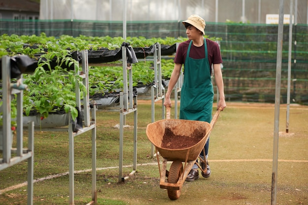 Full shot of male gardener heading towards camera pushing the waggon with soil