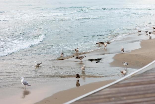 Full shot seagulls on beach