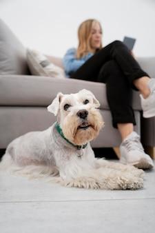 フルショットの女性とかわいい犬
