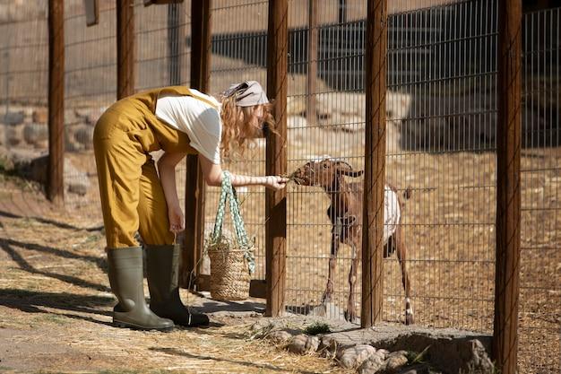 ヤギに餌をやるフルショットの女性
