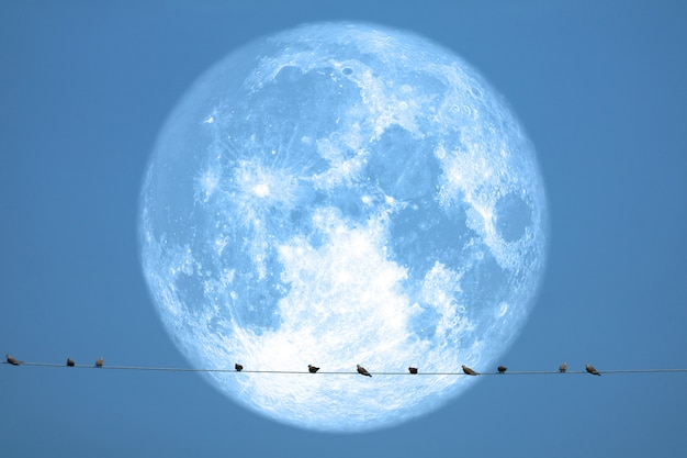 Full strawberry moon back on silhouette birds on electric pole night sky