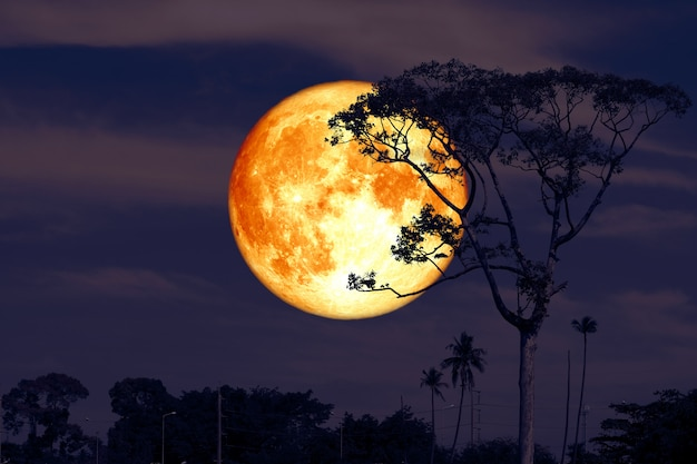 Full super buck moon on night red sky back silhouette tree