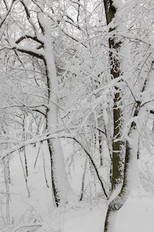 Полностью покрытые снегом лиственные деревья зимой, холодной и снежной зимой, деревья, растущие в парке или в лесу в белом снегу после снегопада.