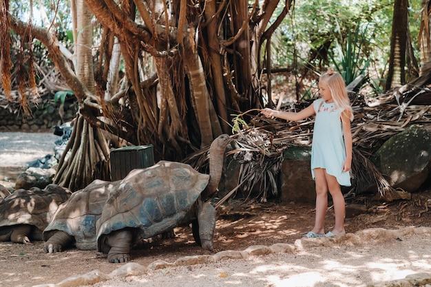 モーリシャスでの楽しい家族向けエンターテイメント。モーリシャス島の動物園でゾウガメに餌をやる少女。