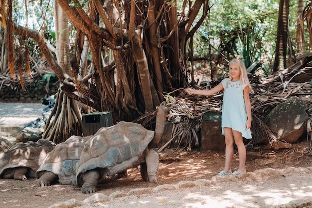 Веселые семейные развлечения на маврикии. девушка кормит гигантскую черепаху в зоопарке острова маврикий