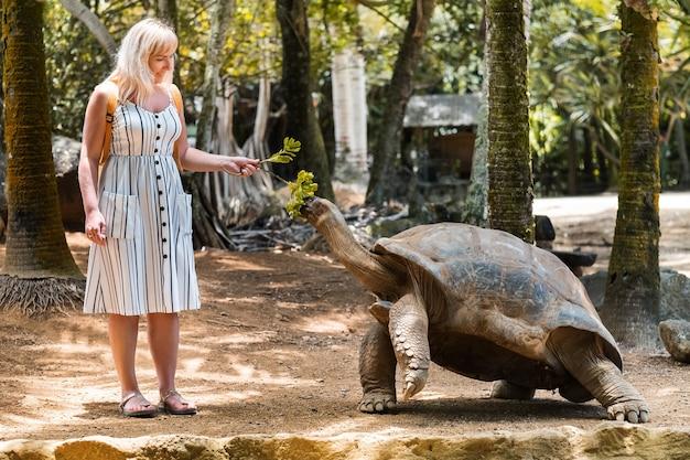 모리셔스에서 즐거운 가족 오락. 모리셔스 동물원에서 거대한 거북이에게 먹이를 주는 소녀
