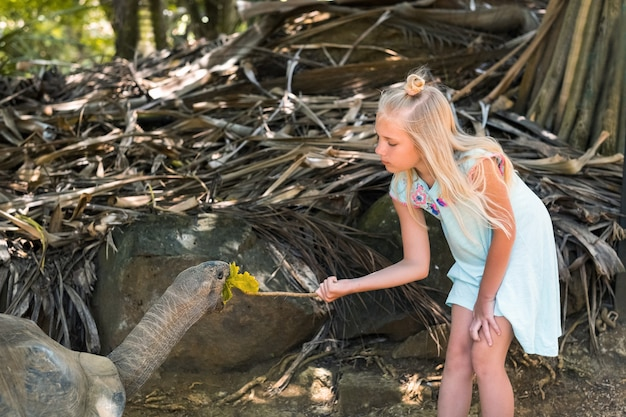 Fun family entertainment in mauritius. a girl feeds a giant tortoise at the mauritius island zoo.