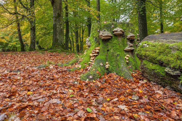 Fungi on an old tree trunk, fallen tree with mushroom formations growing on it in magical green forest