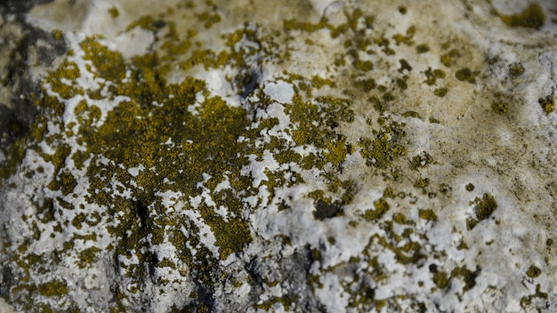 Fungus and green moss on rock
