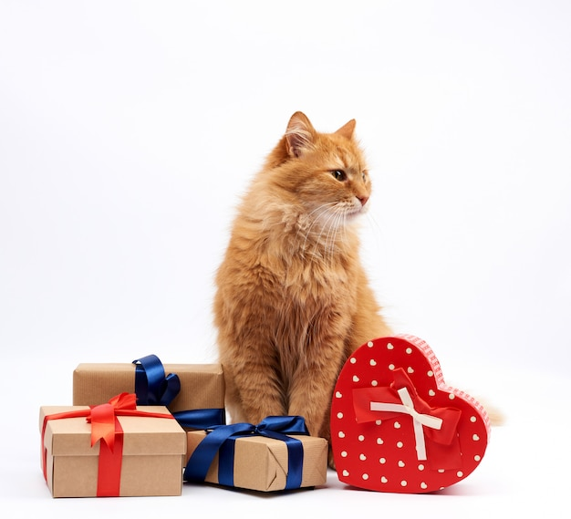 Funny adult ginger cat sitting in the middle of boxes wrapped in brown paper and tied with silk ribbon, gifts and an animal on a white background