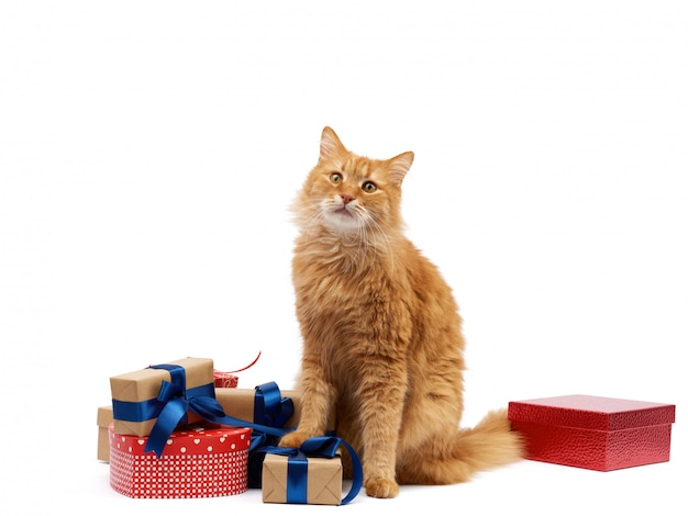 Funny adult ginger cat sitting in the middle of boxes wrapped in brown paper and tied with silk ribbon, gifts and an animal