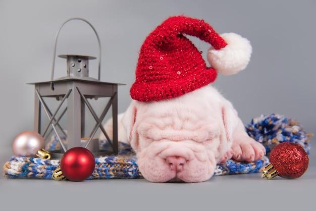 Забавный щенок американского бульдога в шапке санта-клауса