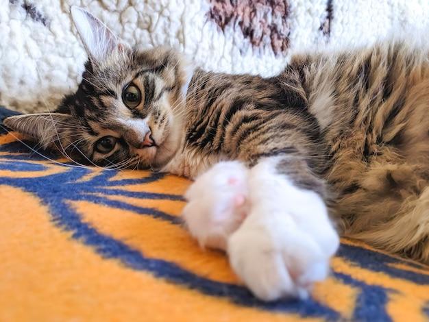 웃기는 매력적인 고양이가 아침 햇살에 침대에 등을 대고 낳는다.