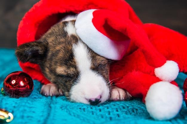 サンタの帽子と赤いボールで面白いバセンジー子犬犬