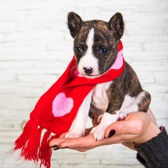 ハートのサンタスカーフで面白いバセンジー子犬犬