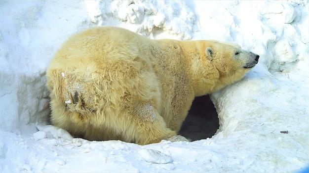Funny and beautiful animals wildlife