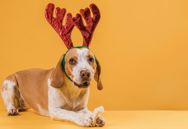 Funny beautiful dog wearing reindeer horns