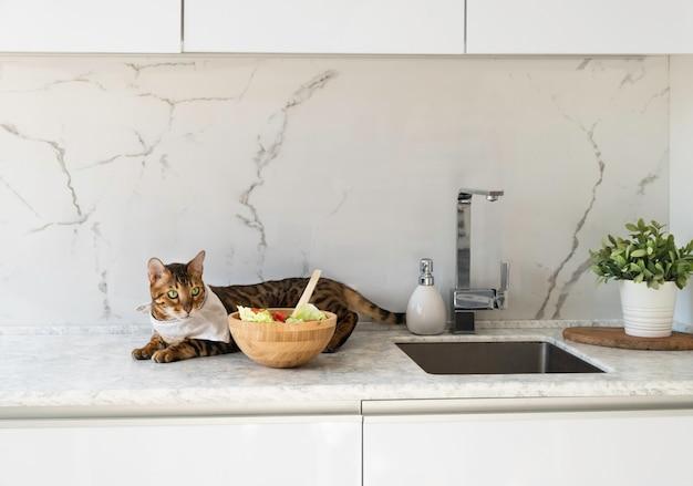 Забавный бенгальский кот с нагрудником, лежащий возле миски со свежим салатом на кухонном столе. здоровая и вкусная еда для домашних животных.