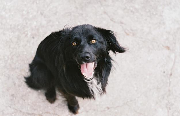 Смешная черная собака.