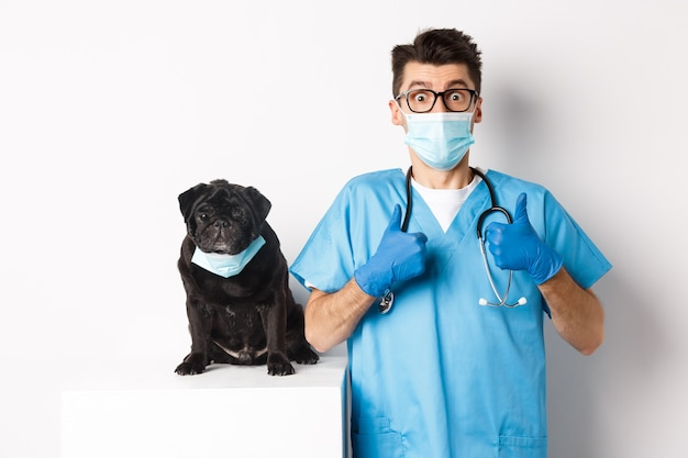 Funny black pug dog wearing medical mask, sitting near handsome veterinarian doctor showing thumbs-up, white.
