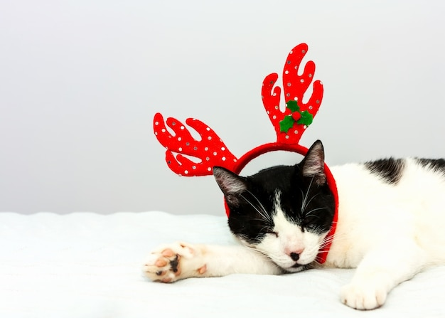Funny black and white cat with red christmas horns sleeps