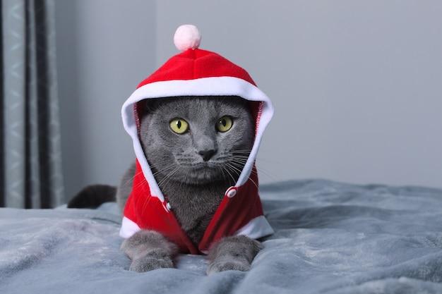 ベッドに横たわっているサンタに扮した面白い青い猫