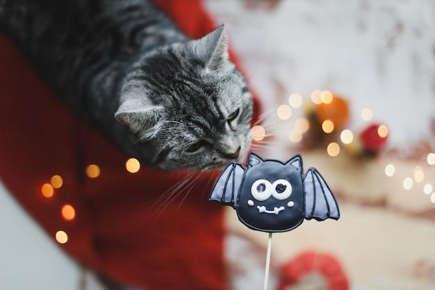 面白い猫とハロウィーンのクッキーバットトリックオアトリートの装飾