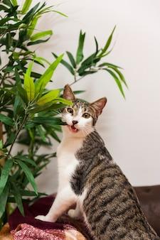 Funny cat biting plant