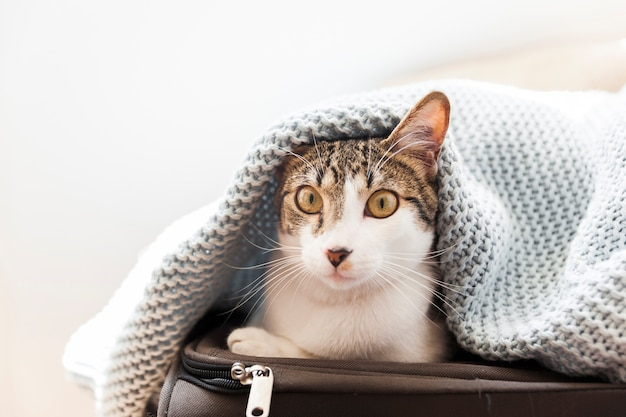 Funny cat under blanket on suitcase