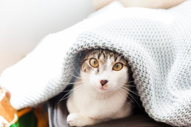 Funny cat under blanket